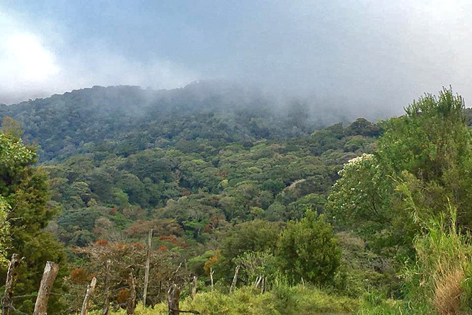 Monteverde Tagestour Nebelwald Reservat Ocotea Tours