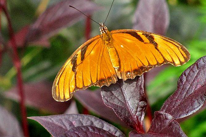 Arenal Montechiari Schmetterling