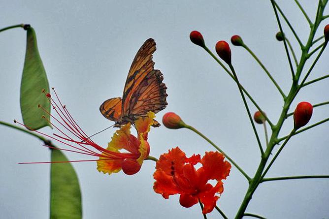 Arenal Montechiari Schmetterlinge
