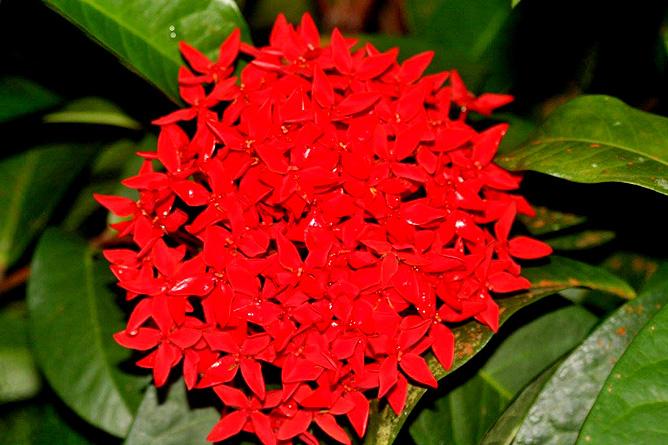 Country Inn Arenal Garten Blumen