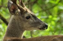 Guanacaste_Nationalpark Santa Rosa_4_Foto Micha 23-09-2017