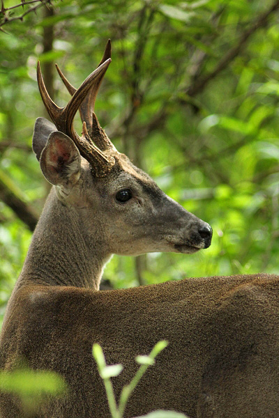 Guanacaste Nationalpark Santa Rosa