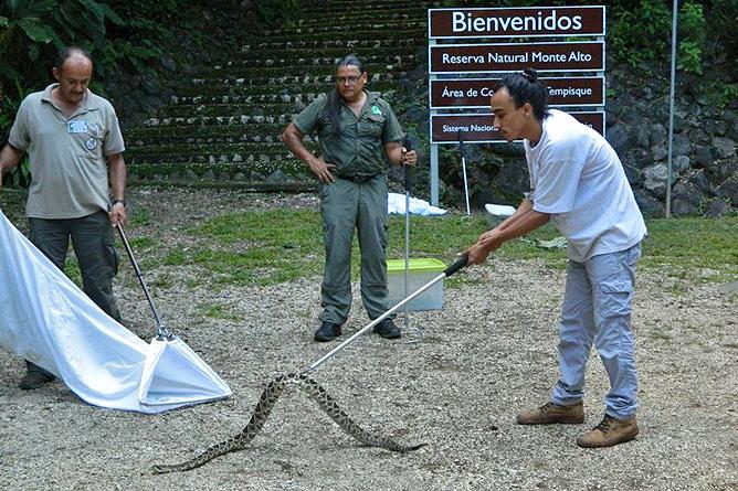 Guanacaste Naturreservat Monte Alto – Schlange