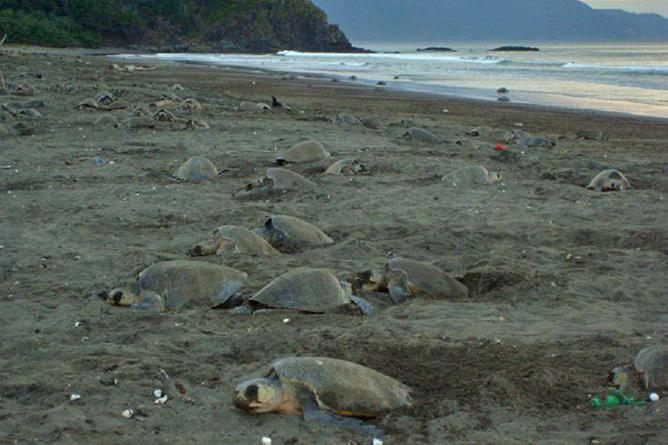 Guanacaste Playa Nancite