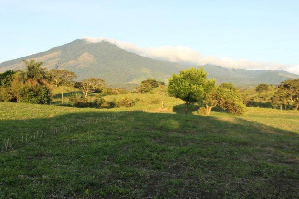 Gunacaste Vulkan Miravalles