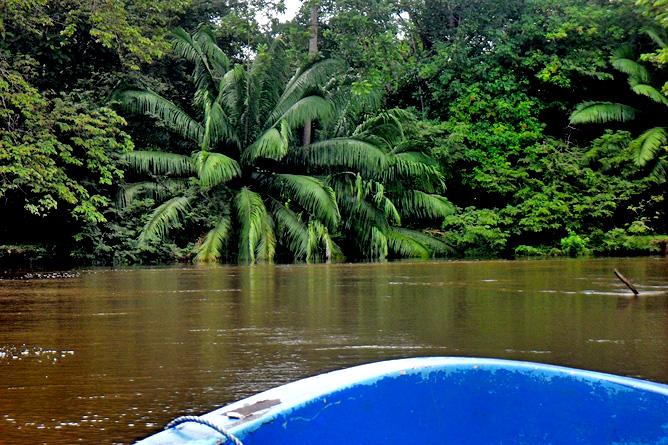Krokodile beobachten Caño Negro Tour