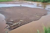 Krokodile Rio Tarcoles Spitzmaul-Krokodile