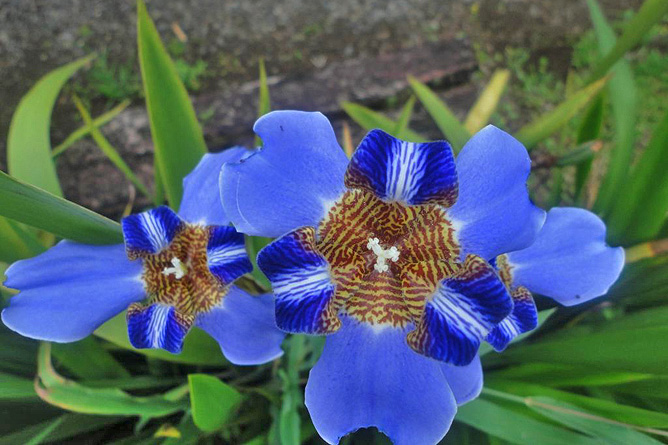 La Ceiba Garten Blumen