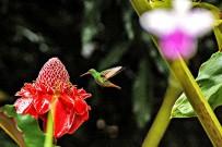 La-Ceiba_Kolibri_2