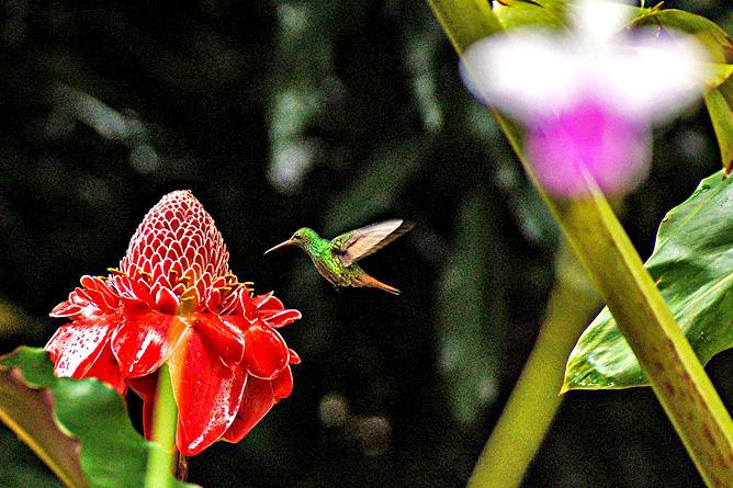 La Ceiba Kolibri