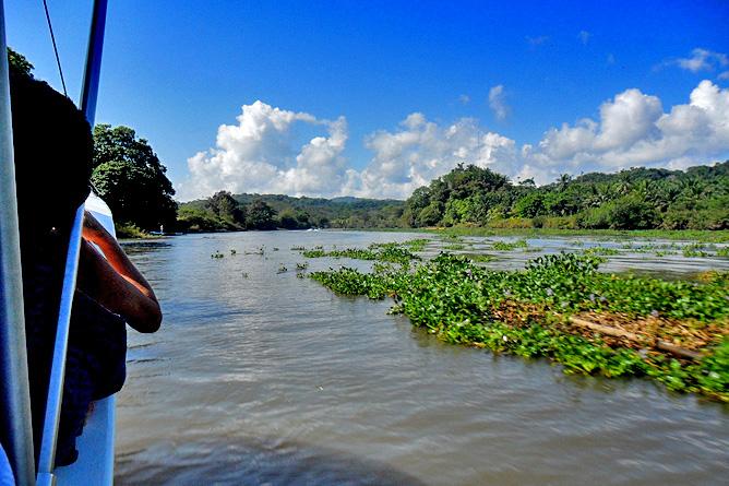 Mangroven Tour am Río Sierpe