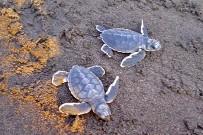 Meeresschildkröten_Grüne-Schildkröte_Babies_Foto-Micha-23-10-2017