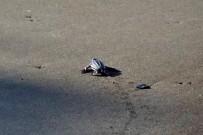 Meeresschildkröten_Lederschildkröte_Babies_Foto-Micha-23-10-2017
