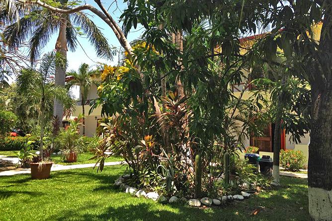 Samara Beach Palmen im Garten