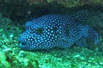 Tauchen_Guanacaste_Unterwasserwelt_Fotos-Micha-03-11-2017