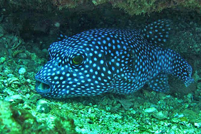 Tauchen Guanacaste Unterwasserwelt