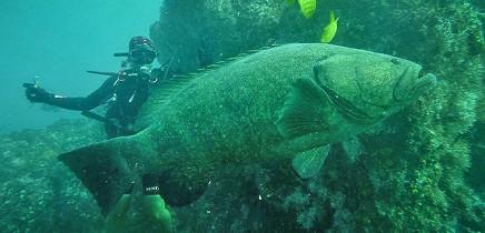 Tauchen_Insel-Cano_Scuba-Diving_Fotos-Micha-03-11-2017