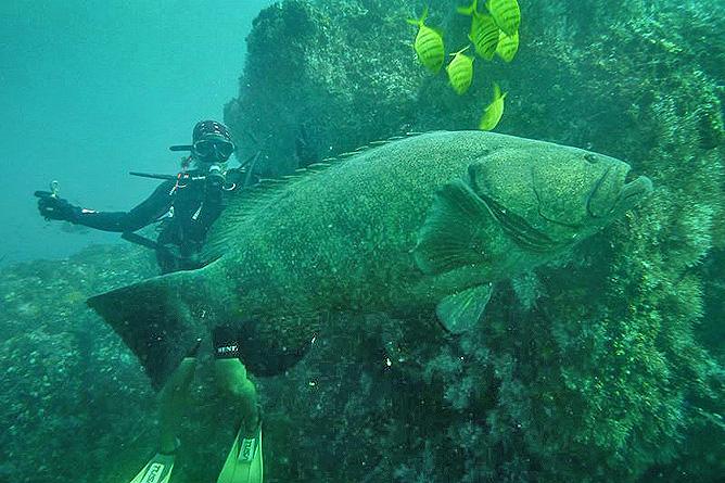Insel Caño Scuba-Diving