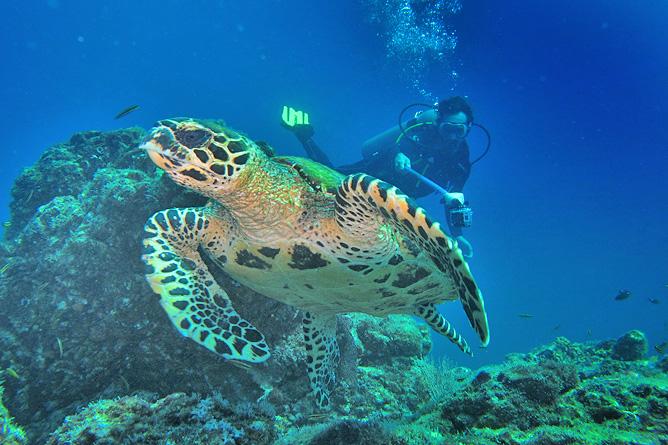 Tauchen Insel Caño Tauchgang Meeresschildkröte