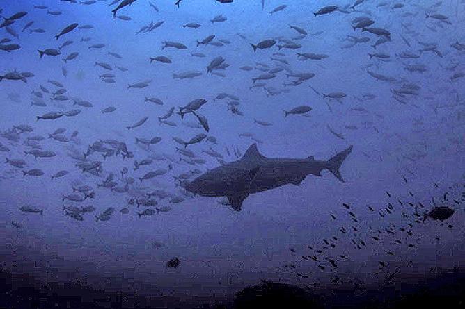 Murcielago Inseln Scuba-Diving Costa Rica