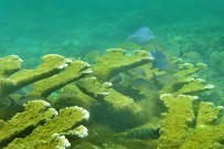 Tauchen_Unterwasser_Foto-Lange-2012