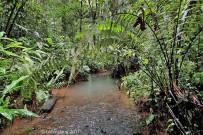 Corcovado Nationalpark_Eingang Los Patos_Biotope_Micha 11-2017