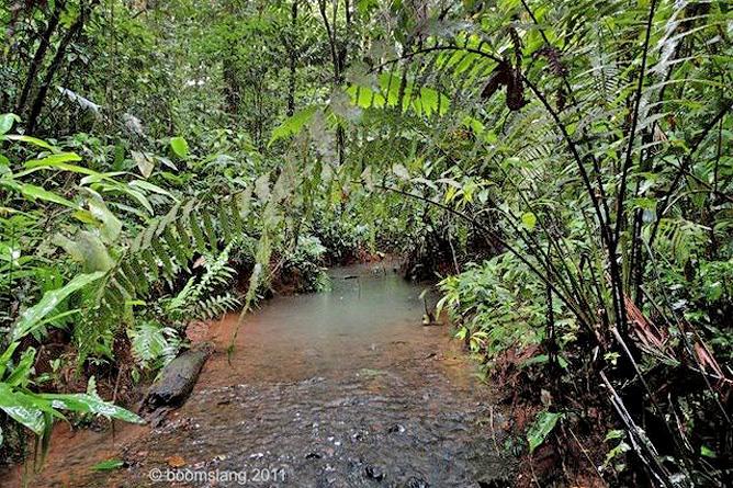 Corcovado Nationalpark – Eingang Los Patos Biotope