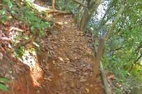 Corcovado Natonalpark_San Pedrillo_Wanderweg zum Wasserfall_Foto Christine