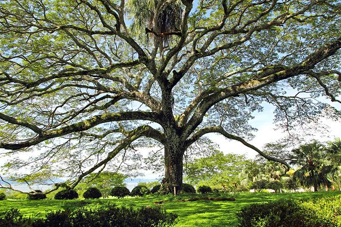 La Ensenada – Trockenwaldgebiet