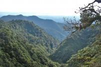 Jaguar_Lebensraum-Monteverde_Foto-Lange_2015