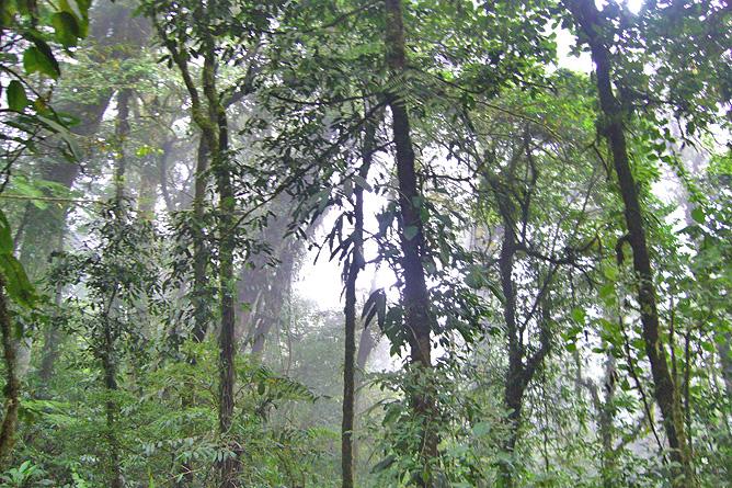Klima Costa Rica Regenfälle Dschungel