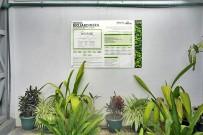 Mapache_Biojardinera_zur-Sauerstoffanreicherung-des-aufbereiteten-Wassers_Inspektionsbesuch_20-11.2017