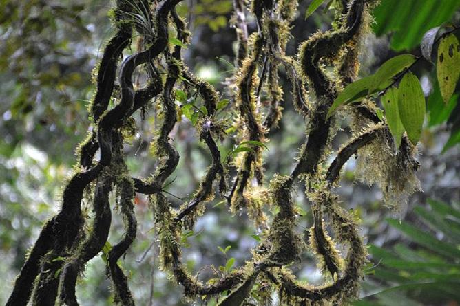 Monteverde Ökosystem (Foto: Magdalena Lange)