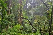 Monteverde_Nebelwald-Reservat_4_Foto-Christine--2015
