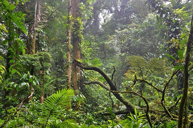 Monteverde Nebelwald-Reservat