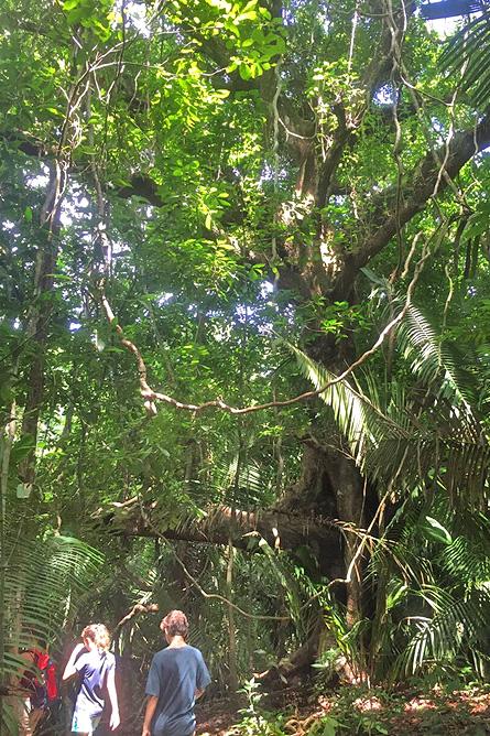 Nicoya Cabo Blanco Naturreservat – Baumriesen, Regenwald