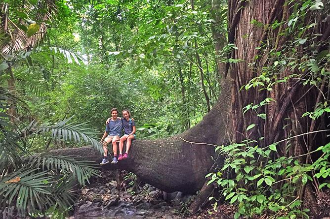 Nicoya Cabo Blanco Naturreservat – Regenwald