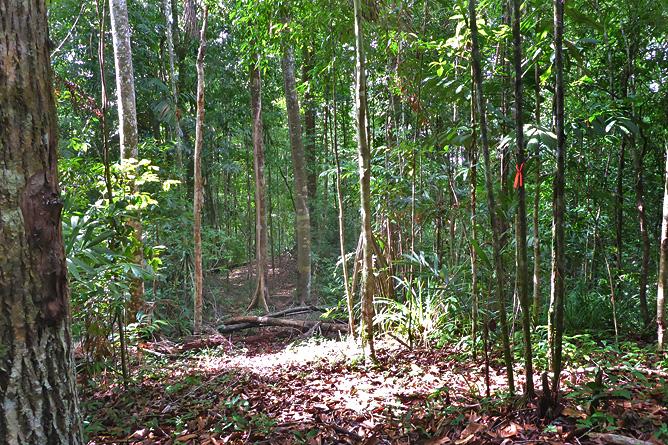Schlangen in Costa Rica – Urwald