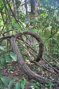 Schlangen in Costa Rica_Urwald_Unterholz_Foto Evelyn_5-2017