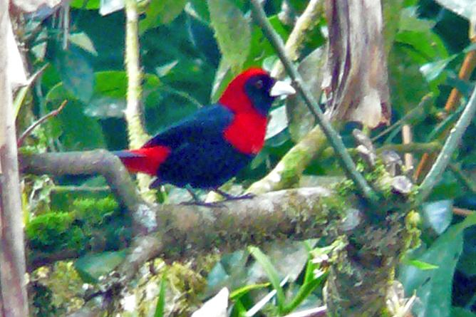 Albergue El Socorro Vogelbeobachtung