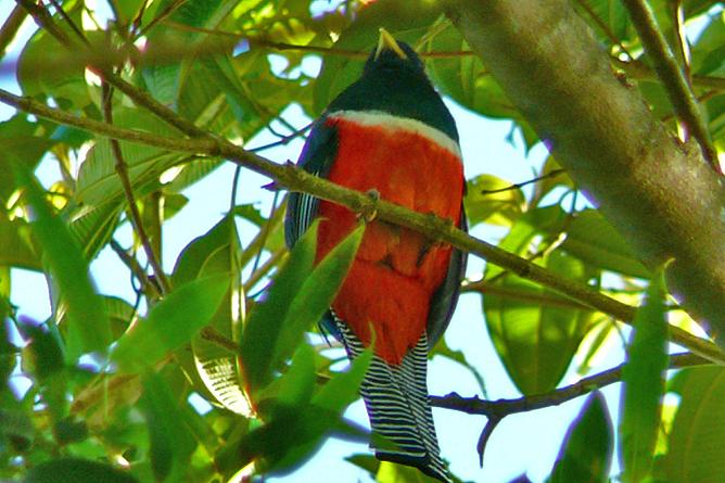 Albergue El Socorro Vogelbeobachtung Bird Route