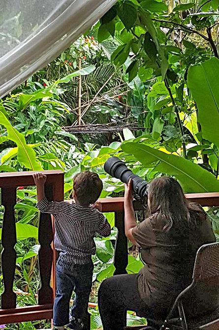 Ara Ambigua Balkon Naturbeobachtung