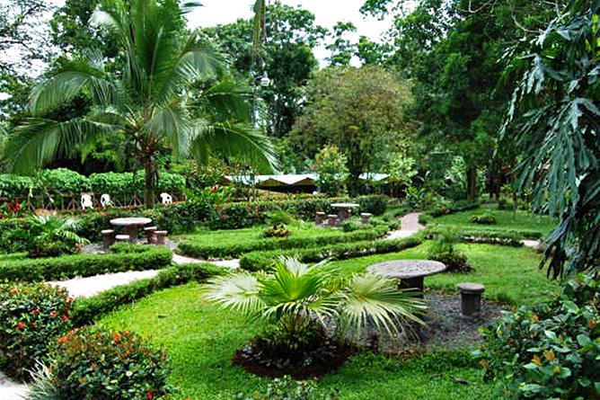 Ara Ambigua Gartenanlage