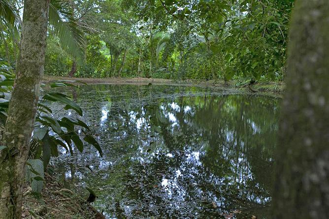 Ara Ambigua Lagune