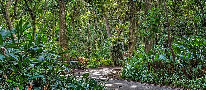 Botanische Gärten Lankester