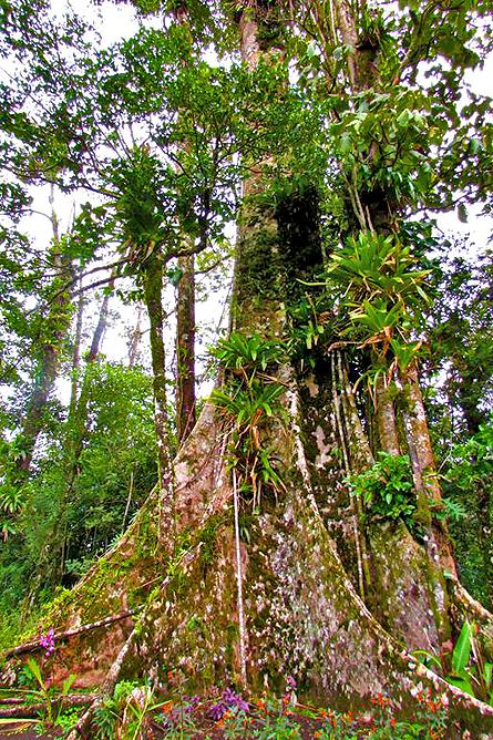 Casitas Tenorio Naturbeobachtung Wanderwege