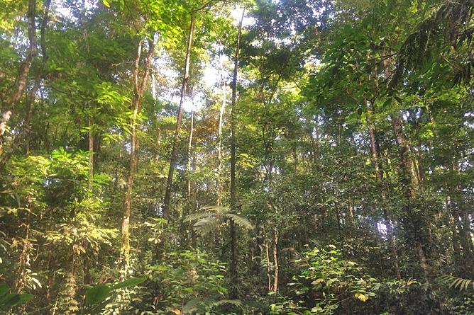 Chilamate Regenwald privates Reservat