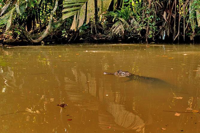 El Icaco Tortuguero Kanal Krokodil