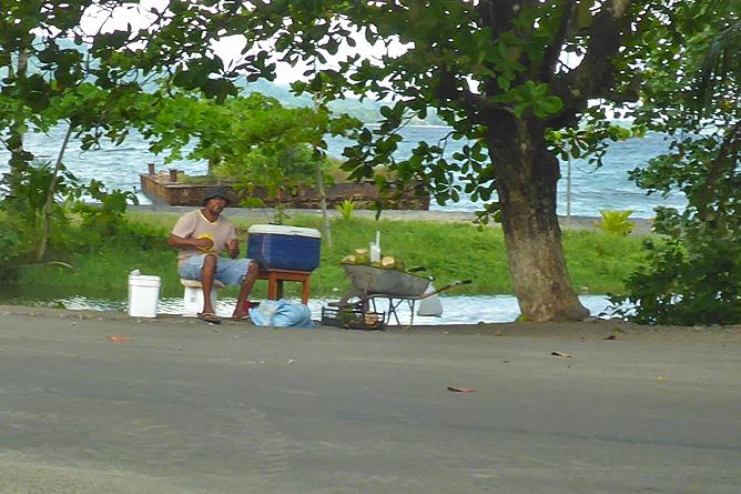 Pipas Trinkkokosnüsse in Costa Rica Händler Karibik