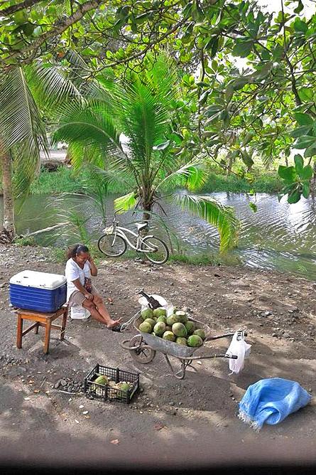 Pipas Trinkkokosnüsse in Costa Rica Verkäuferin Karibik